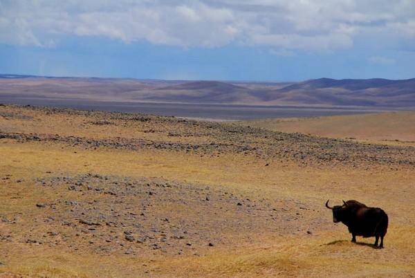 大羌塘景点图片