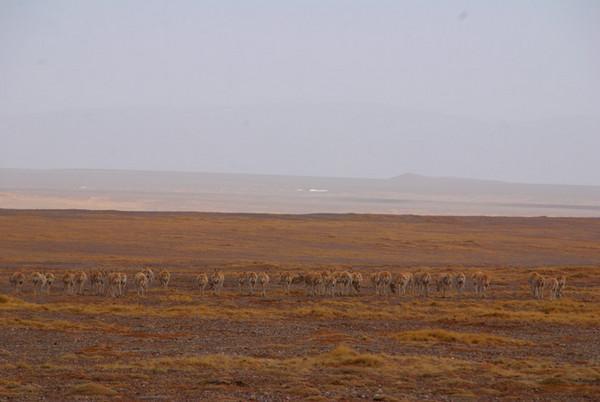 大羌塘图片