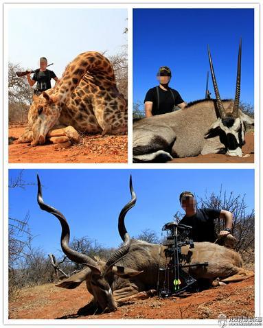 狩猎 南非 草原猎物 长颈鹿 直角羚 旋角羚