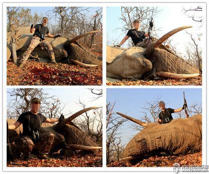 狩猎 非洲 大象 象牙